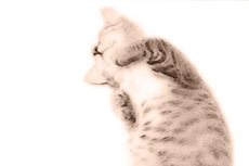 仰向けの猫の写真素材
