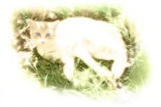 草むらの猫の写真素材