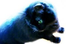 振り返る黒猫