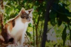 草むらに佇む猫