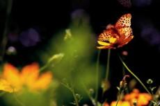 花とツマグロヒョウモンの写真素材