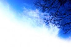 空と木の写真素材(2パターン)