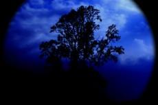 スコープを覗き込んだような空と木