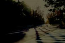 並木の影が長く伸びる横断歩道