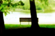 木々とベンチの写真素材