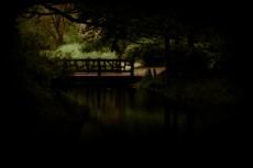 森の中の橋の写真素材