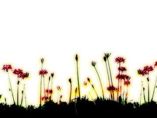 並んで咲く彼岸花(4パターン)