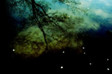 水に映る森(2パターン)
