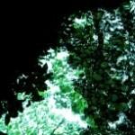 水面に映る葉の写真素材