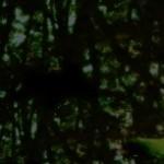 森の水辺の写真素材