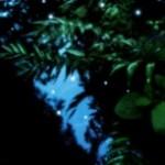 緑と蛍のような光の壁紙