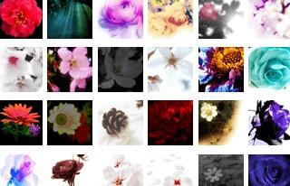 50*50ピクセルの植物の写真(355個)