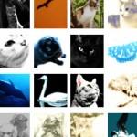 50*50ピクセルの生き物の写真(67個)