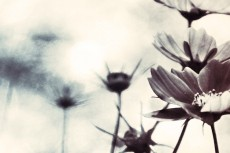 cover-flower001