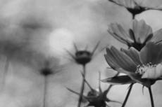 cover-flower001-3