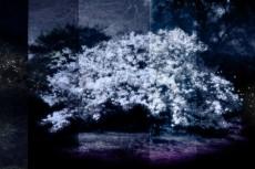 cover-flower002