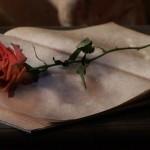アンティークな古書と薔薇(3パターン)