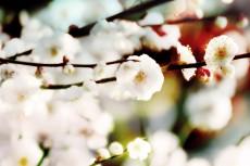 cover-flower005-2