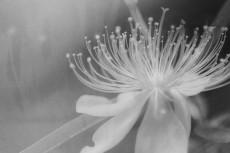 cover_flower004-3
