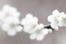 cover_flower005-3