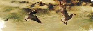 空を飛ぶ三羽のカモメ(3パターン)