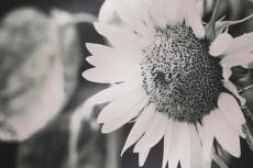 flower370-2