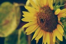 flower370
