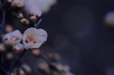 flower373-3