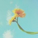 【高解像度】絡まる二輪のガーベラと空(3パターン)