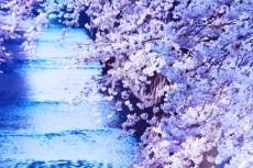 flower375-2