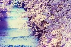 flower375