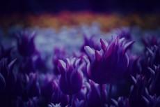 flower376-2