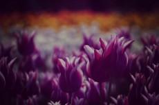 flower376