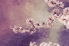 flower378-3