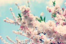 flower379-3