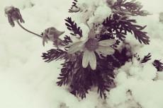 flower380-2