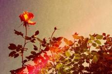 flower382-2