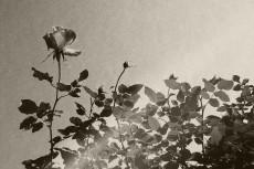 flower382-3