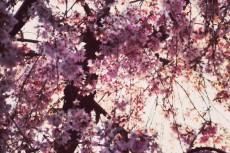 flower384