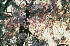 flower384-3