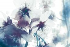 flower386-2