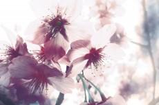 flower386