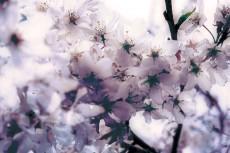 flower387-2