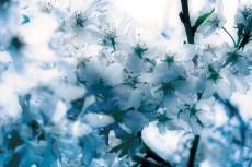 flower387