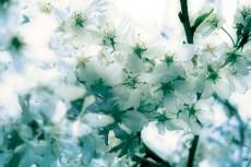 flower387-3