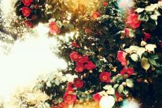 flower388-2