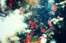 flower388