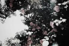 flower388-3