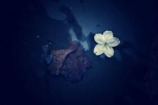 flower389-2