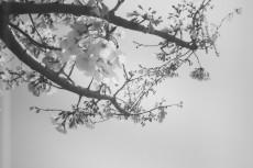 flower390-3